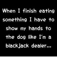 Image result for dog blackjack  show hands no food