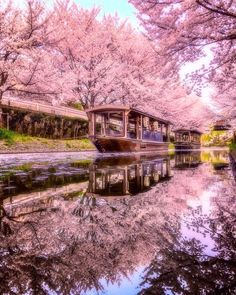 Gallery with top Japan places, 20 pics * Travel Forever Cherry Blossom Japan, Beautiful Places, Beautiful Pictures, Aesthetic Japan, Kyoto Japan, Japan Japan, Japan Sakura, Blossom Trees, Japan Travel