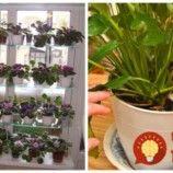 Archívy Dom & záhrada - Page 9 of 273 - To je nápad! Plants, Plant, Planets
