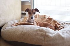 Bean Bag Dog Beds at Rural King - http://phoc.taylorectorstudios.com/bean-bag-dog-beds-at-rural-king/ : #DogBeds Bean bag dog beds – Dogs average adult will sleep 14-16 hours a day. If you sleep that much, Therefore, Has bean bag dog beds give your dog his own space where he can feel safe. A bean bag dog beds can also store your furniture and help the animals you get a good night's sleep by...