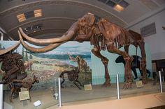 Mammoths in Waco