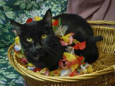 Cat of the day 12-4-2013 is Natalia!  She is a young shorthair black cat, available for adoption from the Salt Lake County Animal Services.  She would love a family for Christmas!