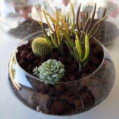 Cómo hacer un terrario con cactáceas • DIY terrarium with cactaceous