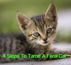 If you found a feral kitten on the street, would you want to help it? While feral cats can take care of themselves fairly well, the mortality rate of feral kittens is moderately high. Read on to learn how to tame a feral kitten, so they can live safely in a domesticated environment.