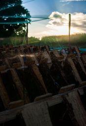 """""""Escargots du Loir"""" Mazangé - Loir et Cher Reportage au cœur d'une ferme hélicicole    Arrosage des parcs avant la mise en place des bébés escargots"""