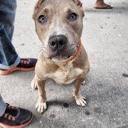 New York Rescue Dog Missing After Devastating House Fire