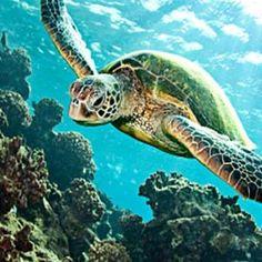 Barbados Beach Day and Turtle Swim Copacabana Carlisle Bay
