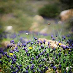 Ίσως κάπου εδώ να ζει μια χαρούμενη μελισσούλα  #bee #spring #nature #naturephotography #naturelovers #nature_lovers #nature_shooters #nature_greece #flowers #canonphotography #