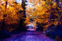 Awesome Autumn by Luiza Lazar