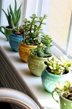 succulents also are a great way to liven up a sunny window sill. (I have a succulent but I also start my seedlings for my outside herb garden on the window sill and transplant them later. Love the green year round! Cacti And Succulents, Planting Succulents, Planting Flowers, Succulent Ideas, Succulent Containers, Growing Succulents, Succulent Care, Cactus Plants, Air Plants