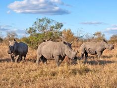 Top of the conference agenda: The last chance to save the rhino - Nature - Environment - The Independent