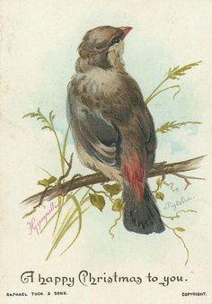 #Christmas #Holiday #Winter #Vintage #Card #Tree #Bird #Branch #Nature