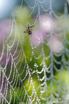 Cobweb with dew on a pastel background. This is the same cobweb as in the previous photo with an other point of view. Spider Art, Spider Webs, Bokeh Photography, Pastel Background, Happy Paintings, Water Me, Tier Fotos, Pretty Photos, Amazing Spider