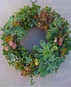 Beautiful succulent wreath by Succulentsplus on Etsy. (85.00 USD)