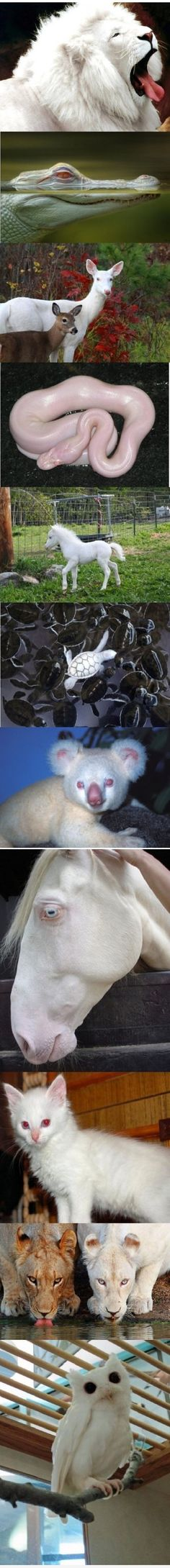 albino animals. I kind of can't handle how that snake looks.