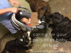 life changes after you bring non-fur children into your life.  here are some tips to help you care for your fur children after baby arrives.