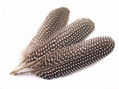 WISHLIST - gestippelde veren van een parelhoen vind ik bijvoorbeeld wel mooi