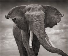 Elephant !