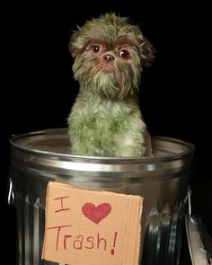 Here is a fluffy little pup that has been transformed into a Grouch! www.bullymake.com via: @duckysdoings #shihtzu