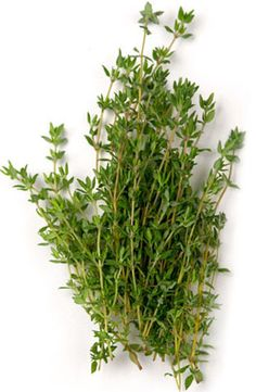 Thyme is one of the best known and most widely-used culinary herbs. Thyme fights several disease causing bacteria and viruses. It is a good digestive aid, helps menstrual cramps and is a great cold remedy. It is used to treat chest and respiratory problems including coughs, bronchitis, and chest congestion. Thyme is an excellent source of iron, manganese, and vitamin K. It is also a very good source of calcium and a good source of dietary fiber.
