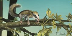 Two new species of early mammals were discovered in China: a horny-clawed tree-dweller and a tunnel digger with shovel-like paws.