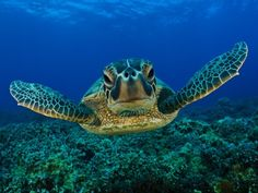 23 Images for the Beautiful and Amazing Underwater Animals World...I LOVE SEA TURTLES and have seen them up-close and personal!