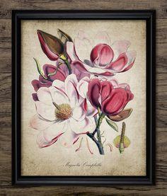 Magnolia Plant Print - Wild Magnolia Plant - Green Plant - Botanical Plant Decor - Printable Art - Single Print #1359 - INSTANT DOWNLOAD