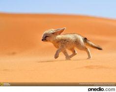 nat geo wildlife 5