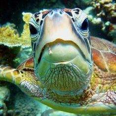 Getting up close and personal with the turtles of Frankland Islands in Queensland, Australia.