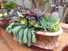 by Chicweed, #succulentssimplified. I love containers and the name my family has for the Donkey Tail.