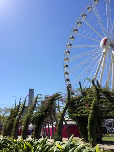 The Wheel of Brisbane at Southbank. Brisbane, Fair Grounds, Places, Pretty, Lugares