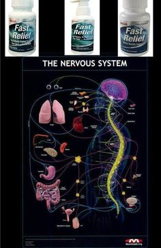 Something to think about! Your whole body is ran through your NERVES and every organ.. Fast Relief products can assist with the pain!!!  New Plexus FAST RELIEF Nerve Health Support can provide symptomatic #relief while promoting the regeneration of damaged nerves by stimulating the body to create Nerve Growth Factor.  www.plexusslim.com/tflan