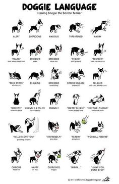 Decoding what your dog is saying