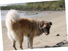 Paul am Elbstrand am Falkensteiner Ufer Dogs, Animals, Hamburg, Animales, Animaux, Doggies, Animal, Animais, Dieren
