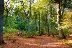 http://us.123rf.com/400wm/400/400/touchstone/touchstone1110/touchstone111000011/10955127-woodland-scene-during-fall-autumn-with-fallen-leaves.jpg