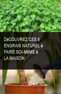 Découvrez ces 5 engrais naturel à faire soi-même à la maison #Maison #Faire #Engrais #Soi Culture, Plants, Diy, Garden, Herbal Plants, Natural Health, Lawn, Beauty Tricks, Backyard Farming