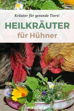 Diy Hacks, Farm Life, Outdoor Living, Herbalism, Garden Design, Home And Garden, Chicken, Animals, Housekeeping