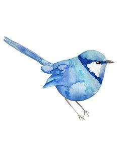 Watercolor Blue Wren  8x10 Print Free U.S by ErinPhippsDesigns, $15.00