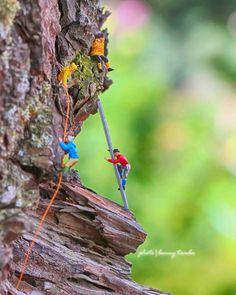 Wood climbing_____#tcb_inlovewithpurple #toyspops2...