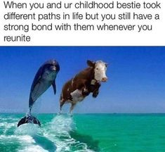 Hey, if you like premium funny ass memes, then this is the place for you! Check out these original Cool Strange funny ass memes. Funny Friend Memes, Stupid Funny Memes, Funny Relatable Memes, Haha Funny, Funny Cute, Funny Stuff, Funny Vegan Memes, Hilarious Sayings, 9gag Funny