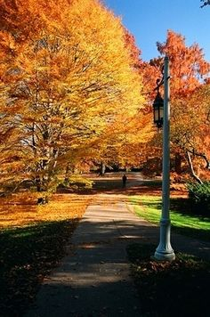 Fall is the best time at Michigan State!!
