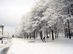 My favourite place on campus-the grove of trees beside the SUB.   Its Cold Outside, Google Images, Winter Wonderland, Vancouver, The Outsiders, Places, Walking, Trees, Outdoor