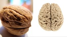 These 5 foods resemble what they help...