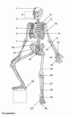 Skeleton Anatomi Coloring Pages : Bulk Color Elementary Physical Education, Science Education, Science Activities, Human Body Unit, Medical Anatomy, Human Anatomy And Physiology, Anatomy Study, Medical Art, Art Journal Techniques