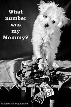 The puppies you get in the pet store all have a mom they left behind at a puppy mill. Just a number, probably without a name, and surely living a life without love or kindess. REPIN this image in honor of all the dog still living at the puppy mills. #lola #NMDR #rescue