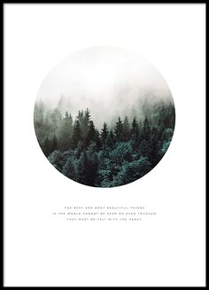Poster with a beautiful forest