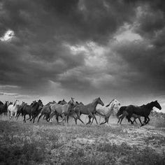 What a site with these wild horses running!  Looking at the sky above them.