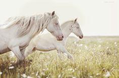 MUST see photography! Amazing shots! I wish i was in Iceland! gigja einarsdottir, icelandic horses, iceland,  @Portfoliobox