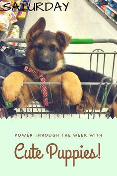 Saturday, a week of cute puppies German Shepard Best Dogs, All Dogs, Dogs b959742da457