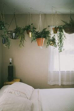 Plants. Cool idea line a wall with hanging plants. Living room or dinning room.